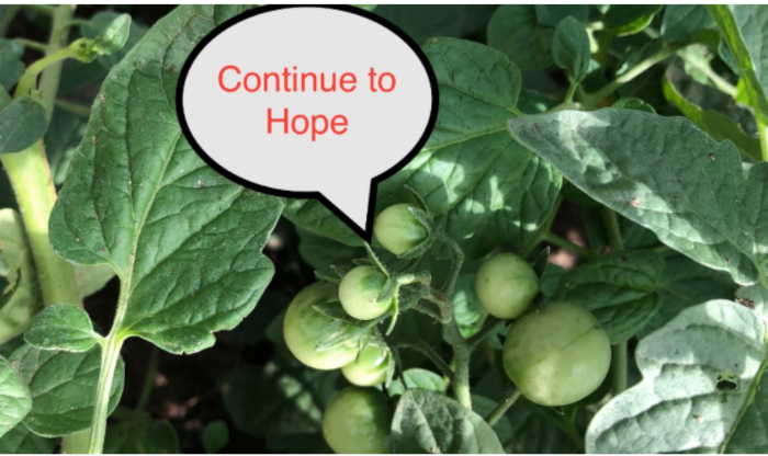 I Continue to Hope–Radio Rumination
